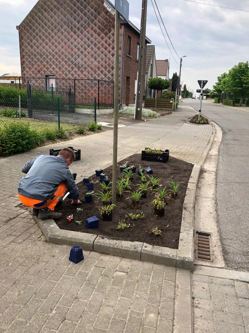 Aanplanten planten publiek domein