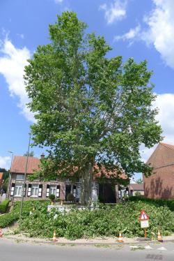 Plataan kerk glabbeek foto 1